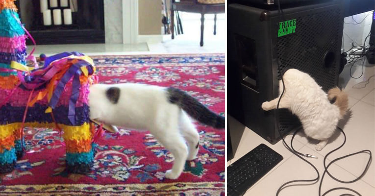 Bu Kediler Oraya Nasıl Girdi