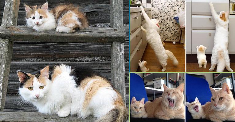 Kedicikler ve Kendilerine Benzeyen Yavruları