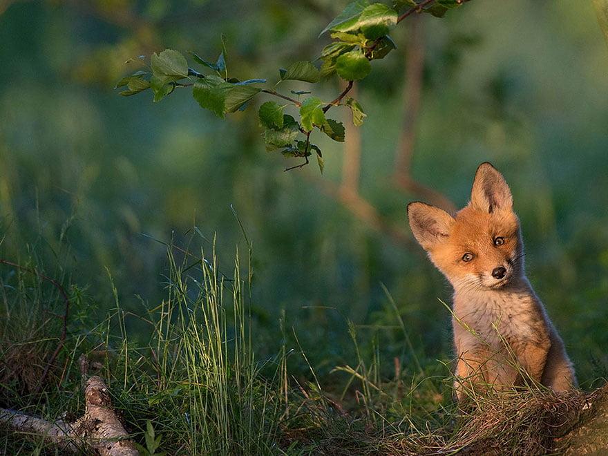 2015'in En İyi National Geographic Fotoları