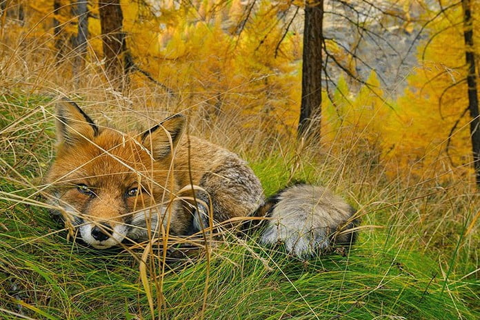 2015 National Geographic En İyi Fotoğraflar